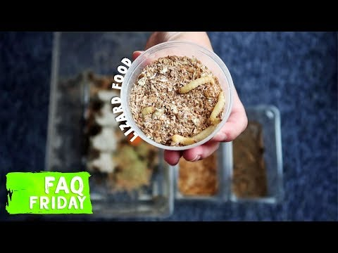 How To Care For Feeder Insects?    FAQ FRIDAYS