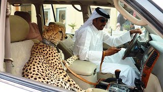 top 10 Szokatlan Dolog Ami Csak Dubai ban Ltezik legjobb