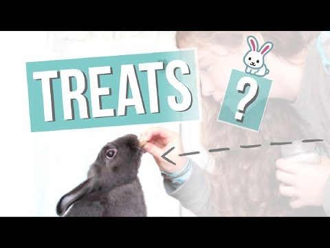 What Treats Should You Feed A Rabbit?
