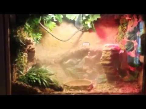 Fog your reptile terrarium or cage