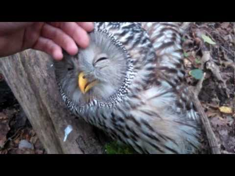 Sweet wild Owl....You must see this