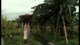 মাছের খাদ্য হিসাবে কুটিপানা বা ডাকউইড এর চাষ এবং ব্যবহার-Bangladesh Open University,shaik siraj-3