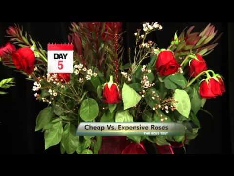 Cheap Vs  Expensive Roses