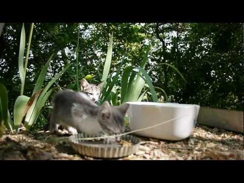 Feral Kittens' trap