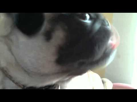 FUNNY DOGGY PANDORA  it will make you not stop laughing!!!!!!!!!!!