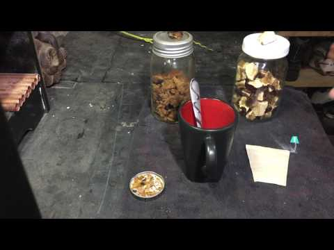 How to make chaga & reishi mushroom tea