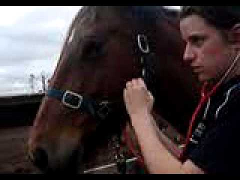 examine Horses Pulse or Heart Rate
