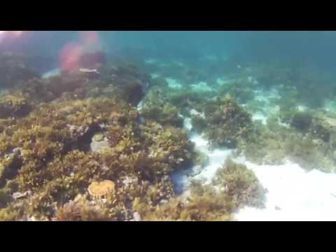 Noa Noa Island -Bluespotted Stingray 1