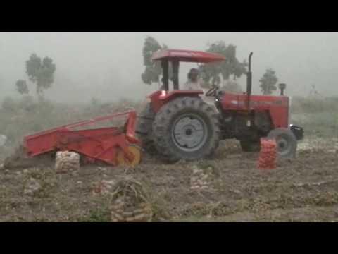 Potato Harvest ! Yusufiya-Iraq  حصاد البطاطة في مدينة اليوسفية العراق