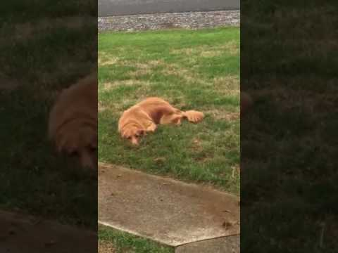 Dog Busted For Digging in Front Yard