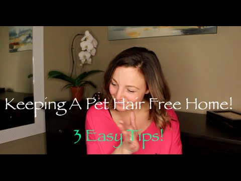Keeping You Home Pet Hair Free! | 3 Tips To Manage It All, Easily.