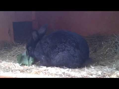 Build Bunny Rabbit Hutches. Building a Big Rabbit Hutch For Cheap