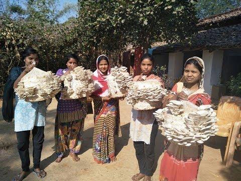 Oyster Mushroom Cultivation Process