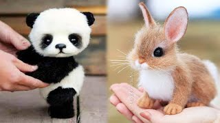 Animals SOO Cute! Cute baby animals Videos Compilation cutest moment of the animals #9