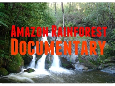 Amazon Rainforest Documentary: Brazil Nut and Timber Production Under Threat in Amazon Rainforest