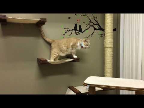 Cat Climbing Wall Rope Bridge