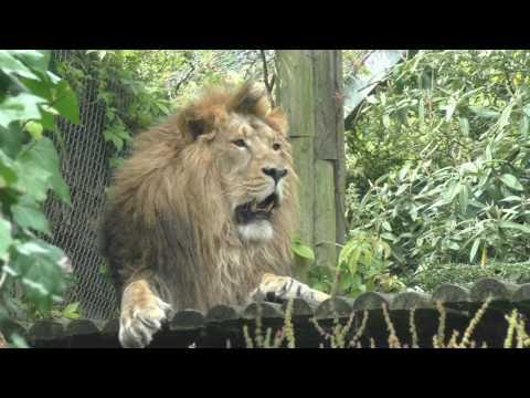 Bristol Zoo (6th July 2016)