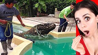 The most UNUSUAL PETS Ever !