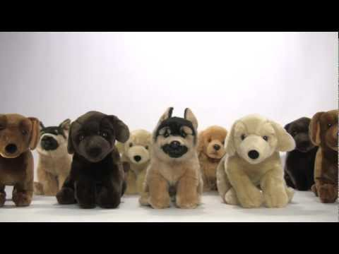 What Not To Buy? Pet Store Puppies!