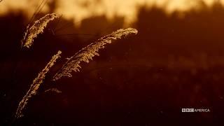 Visual Soundscapes - Grasslands   Planet Earth II   BBC America