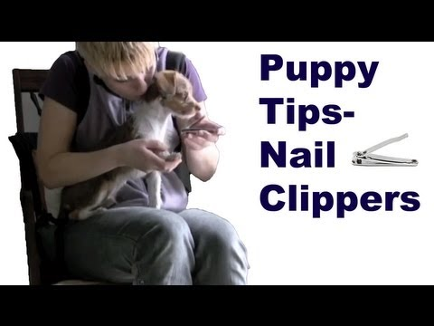 Dog training tips: You can use human nail clippers with puppies