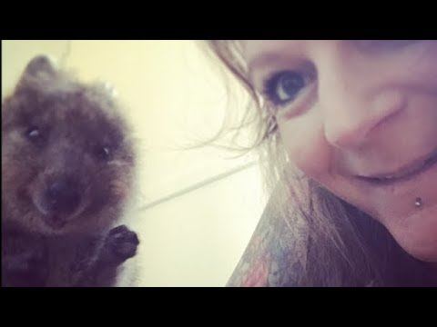 Quokkas! The happiest and cutest selfie animal in the world