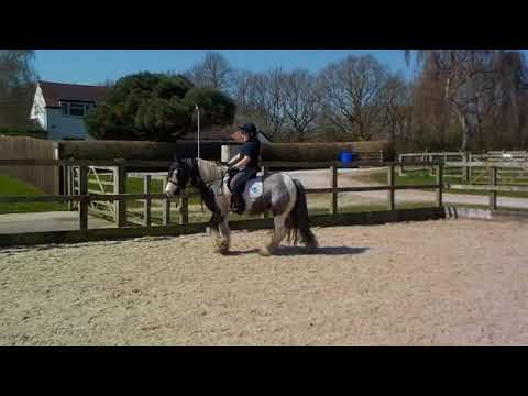 Chico is looking for a new home as a ridden pony
