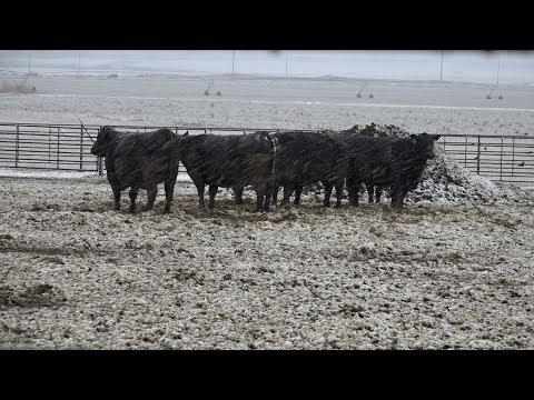 Managing Livestock in Winter