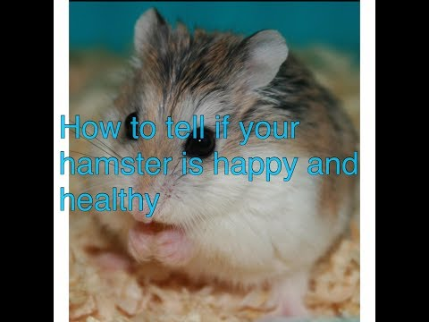 How To Tell If Your Hamster Is Happy And Healthy