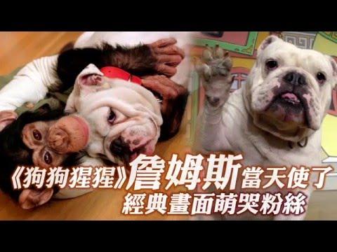 《狗狗猩猩》詹姆斯當天使了 經典畫面萌哭粉絲 --蘋果日報20160314