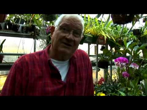 Growing Orchids in Aquatic Conditions