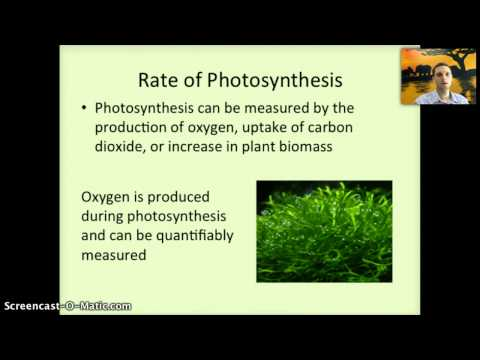 IB 2.9 & 8.3 - Photosynthesis Part 1