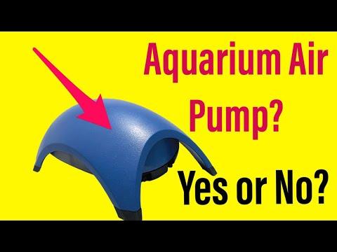 Do You Need an Air Pump In Your Aquarium?