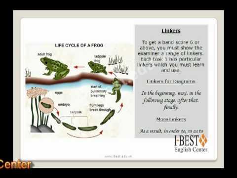 IELTS Task 1 Diagrams (www.ibest.edu.vn)