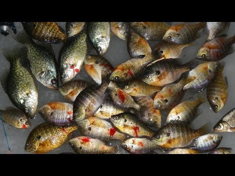 Vlog #5: Ice Fishing for Bluegill, Crappie, and Hybrid Sunfish
