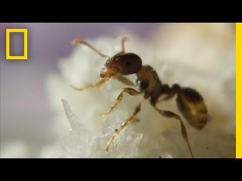 Ants Help Clean New York City By Eating Your Food Scraps | One Strange Rock