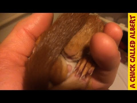 Raising A Baby Squirrel By Hand - A Childhood Dream