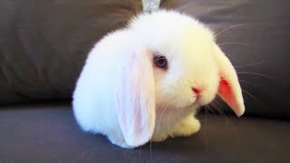 Funny and Cute Rabbits 🐰 Rabbit Fooling Around [Funny Pets]
