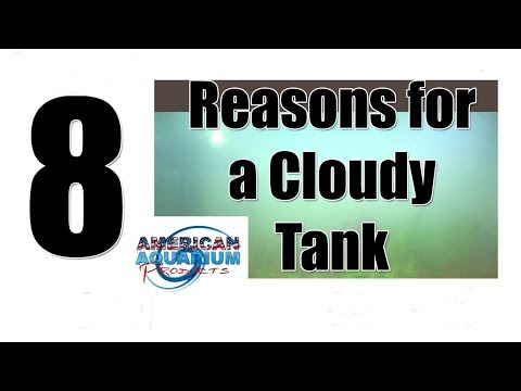 8 Reasons Cloudy Aquarium Water | Murky Water & Gray Fish Tank