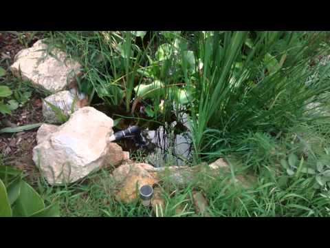 DIY koi pond, filter, water garden,  bog filter