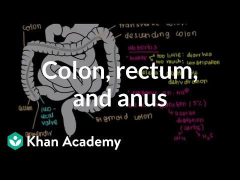 Colon, rectum, and anus | Gastrointestinal system physiology | NCLEX-RN | Khan Academy