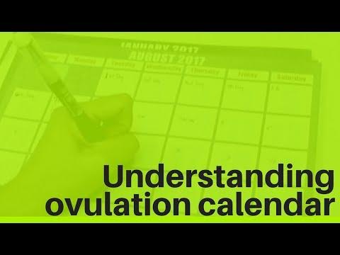 Understanding ovulation calendar