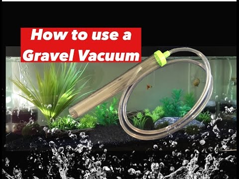 How to use a Gravel Vacuum without having to suck on the tube. Simple and easy!!