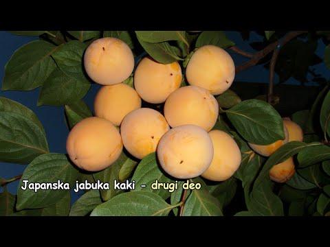 Japanska jabuka kaki   drugi deo