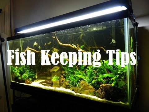 Beginner Fish Keeping tips from the Fish Tank Community