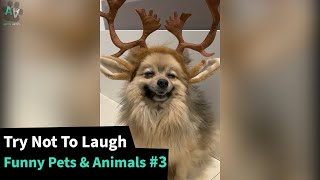 The Funniest Pet Animal Videos  - TRY NOT TO LAUGH 😂 #3