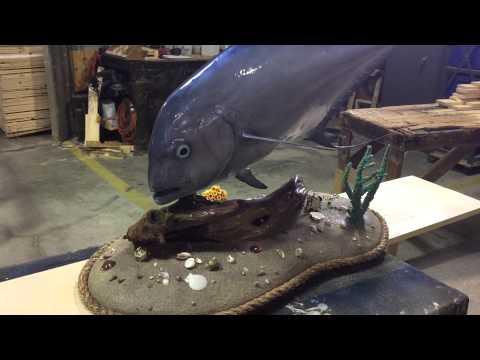 African Pompano Custom Base Fishmount - Gray Taxidermy Fishmounts