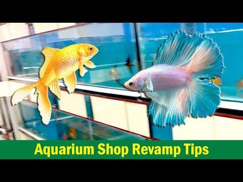 Revamp tips for Small Scale Aquarium Shop