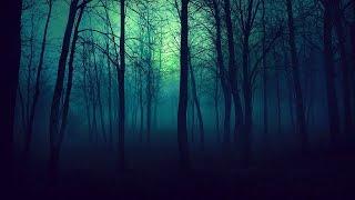 बेनिंगटन ट्रायंगल जंगल  - List of Scientifically Fascinating Places on Earth