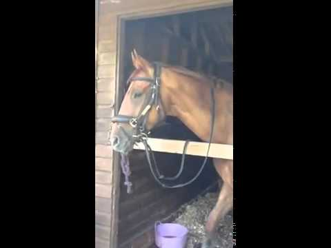 SDF Sport Horse Felixx 3   YouTube
